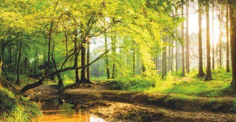 """20.10.2018 – Jetzt Plätze sichern: """"Natürlich gesund bleiben im Wittmunder Wald"""""""